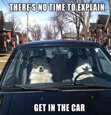 Dog Driving Meme - dogs driving meme the news wheel