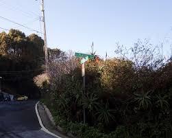 brisbane native plants a short tour of brisbane california traeger tours