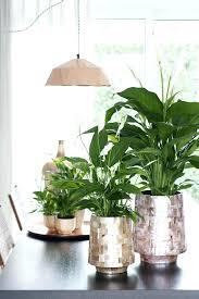 plantes d駱olluantes chambre plantes depolluantes chambre 5 plantes a mettre dans la chambre pour