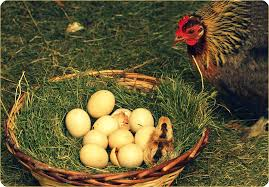 Don Count The Chicken Before They Hatch Don T Count The Chicken Before They Re Hatched Easy Branches