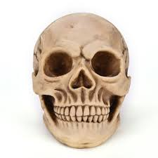Halloween Skeletons Life Size by Online Buy Wholesale Medical Party Supplies From China Medical