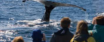 Blue Water On The Ocean Cape Cod - whale watching on cape cod is the best massachusetts pastime