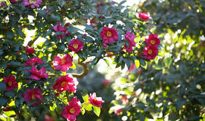 winter garden bring an extra sparkle with a variety of flowers
