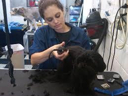 spirit halloween wichita ks furry tails mobile pet grooming wichita ks 67212 yp com