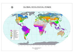 global zone map global ecological zoning for the global forest resources