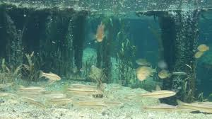 Oklahoma snorkeling images Underwater oklahoma jpg