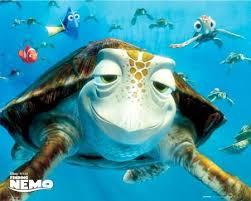 Finding Meme - finding nemo turtle meme generator