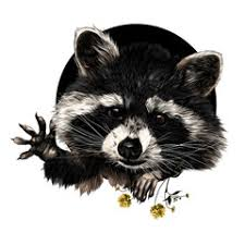 search photos raccoon