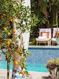 pot a fruit tree