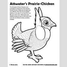 prairie dog coloring page attwater u0027s prairie chicken coloring page u003c fun free downloads