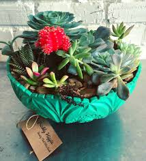 cacti u0026 succulent care u2014 the prickly hippie