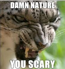 Damn Nature You Scary Meme - damn nature you scary know your meme