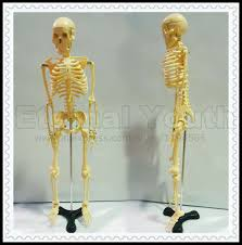 Human Anatomy Full Body Picture Online Buy Wholesale Full Body Anatomy From China Full Body