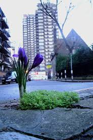 a little bloom to brighten up the gloom u2014 the pothole gardener