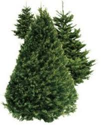 real christmas trees where to cut buy your own christmas tree in orange county oc