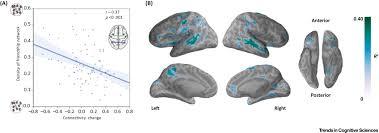brain and social networks fundamental building blocks of human