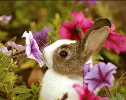 76 entries in bunnies wallpapers group