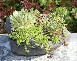 planter for succulents unique planters for succulents planters for succulents succulent