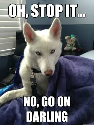 Oh Stop It Meme - oh stop it no go on darling magnficently photogenic husky