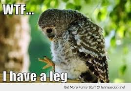 Potoo Bird Meme - surprised owl meme owl best of the funny meme