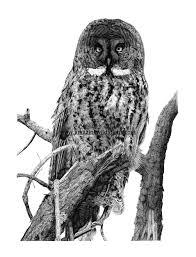 black and white drawings amazink wildlife art