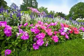 starting a flower garden here are tips for beginners