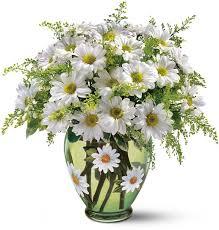 Daisy The Flower - 906 best daisy daisy images on pinterest daisy flowers daisies