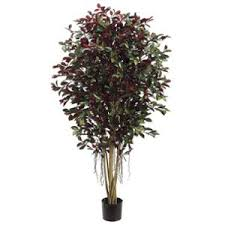 cheap small trees for pots find small trees for pots deals on