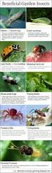Small Red Bugs On Patio by Best 25 Garden Bugs Ideas On Pinterest House Insects Insect