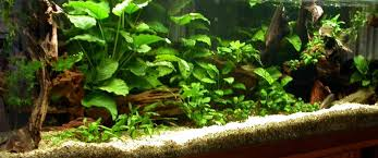 Tank Aquascape My Aquariums And Aquascapes