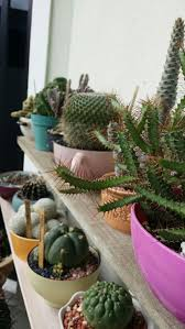 1351 best cactus images on pinterest plants cacti and cactus