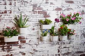 how to create an indoor living wall 6 steps eluxe magazine
