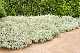 Fragrant Patio Plants 10 Most Fragrant Outdoor Flowers Best Smelling Plants For Garden