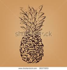 vector drawing pineapple fruit free vector download 90 699 free