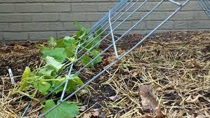 The Trellis And The Vine Make A Cucumber Tent Trellis Bonnie Plants