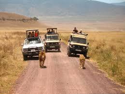 safari savannah tours safari in tanzania transfers car hire