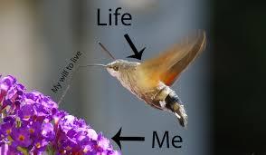 Moth Meme - moth meme album on imgur