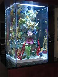yacht aquariums gallery living color aquariums