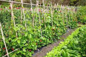 Vegetables Garden Ideas 5 Simple Vegetable Garden Design Ideas For All Seasons