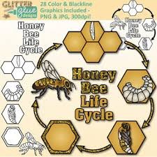 honey bee cycle clip art animal groups insect