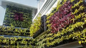 wall hanging planters cappl vertical garden wall hanging pot 25 pcs green color