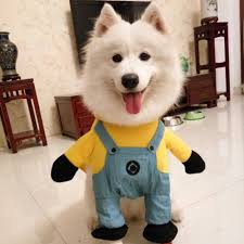 2016 sale modelling of minions micky dog costume novelty funny