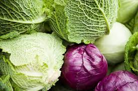 cabbage varieties u2014red vs purple cabbage