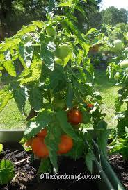 30 tips for a great vegetable garden harvest plus 6 garden recipes