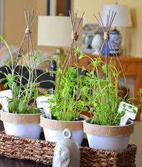 a guide to growing herbs indoors love the garden