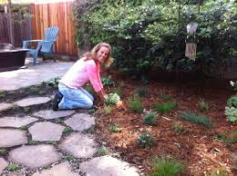 create a pet friendly low water yard this spring the press