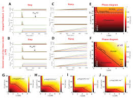 nonlinear feedback drives homeostatic plasticity in h2o2 stress