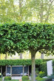 15 best arbors images on pinterest arbors garden arbor and