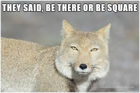 Meme Fox - tibetan sand fox is not gonna be there meme on imgur