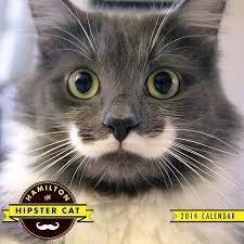 Hipster Cat Meme - best of 20 hipster cat meme testing testing